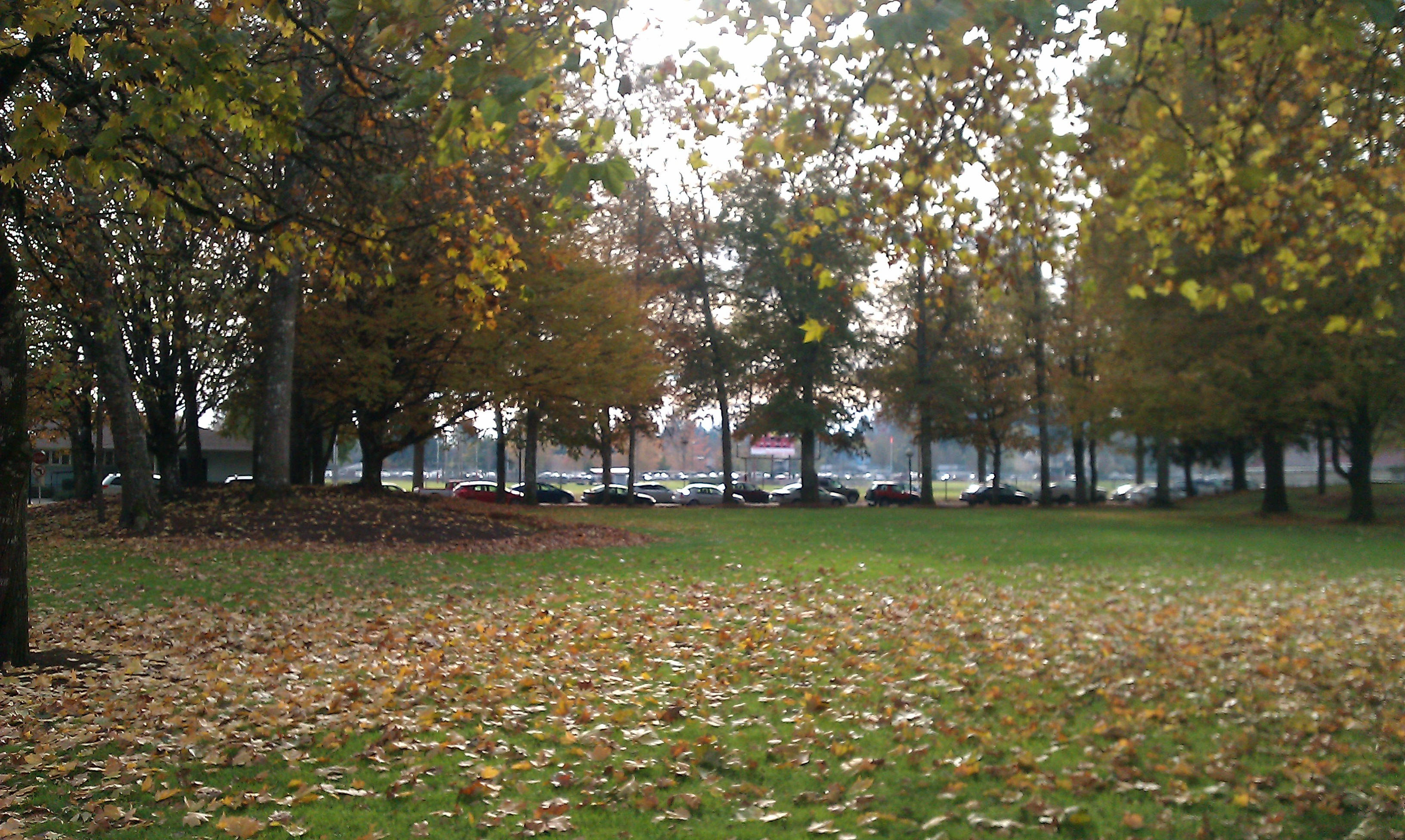 The Grove at WOU, Potential Zimfest Marketplace Site